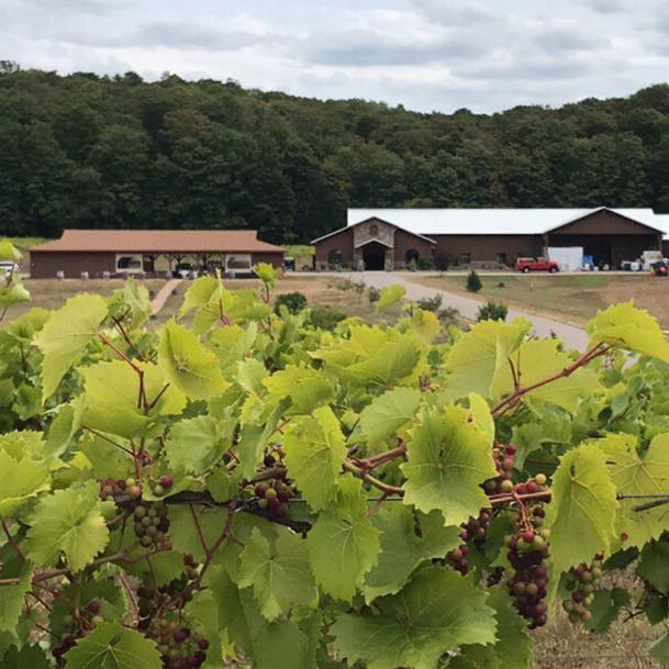 mackinaw trail winery and brewery wines 1