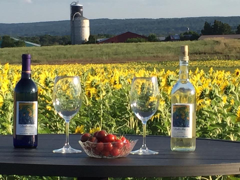 rudbeckia winery 8
