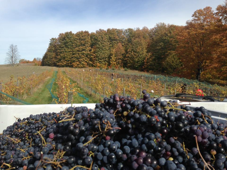 walloon lake winery 15